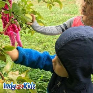 apple orchards indianapolis indy best for babies